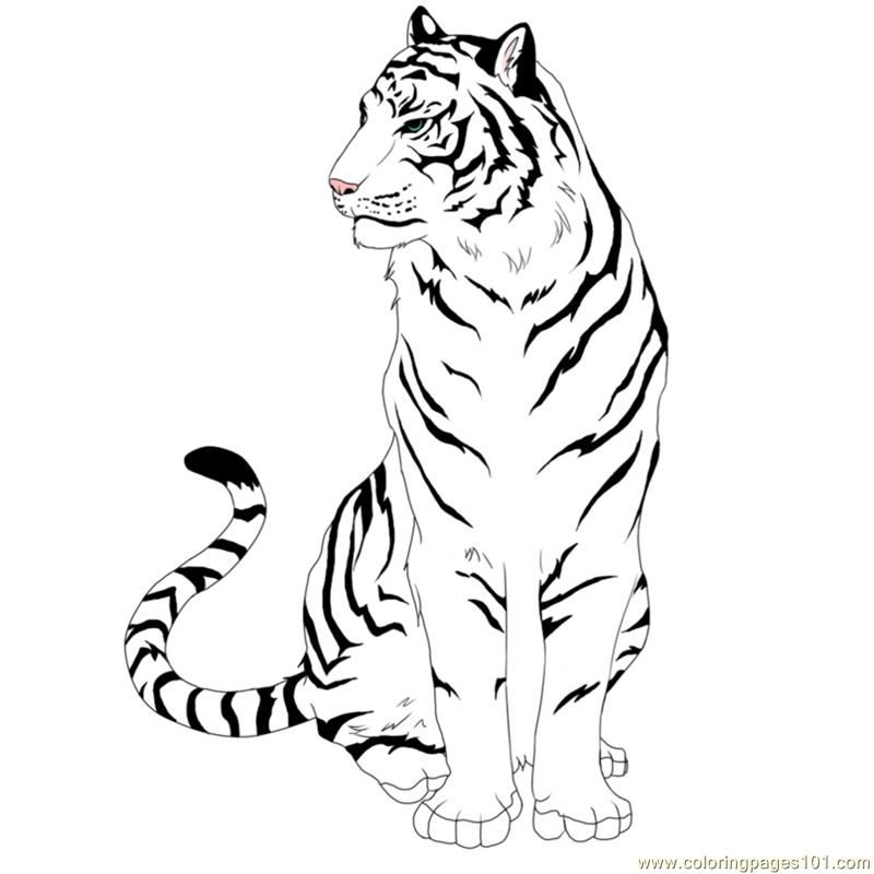 Free Easy Tiger Coloring Pages Tiger Drawing Tiger Art Drawings