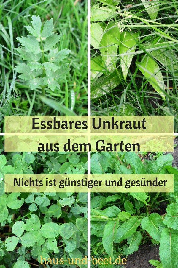 Photo of Spiselige ugras vokser i hagen – hus og seng