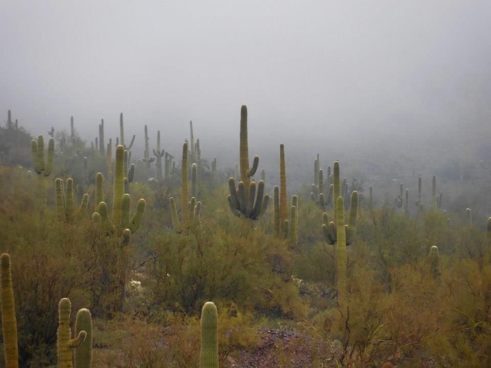 Saguaro Nature center, Hiking trails, Nature