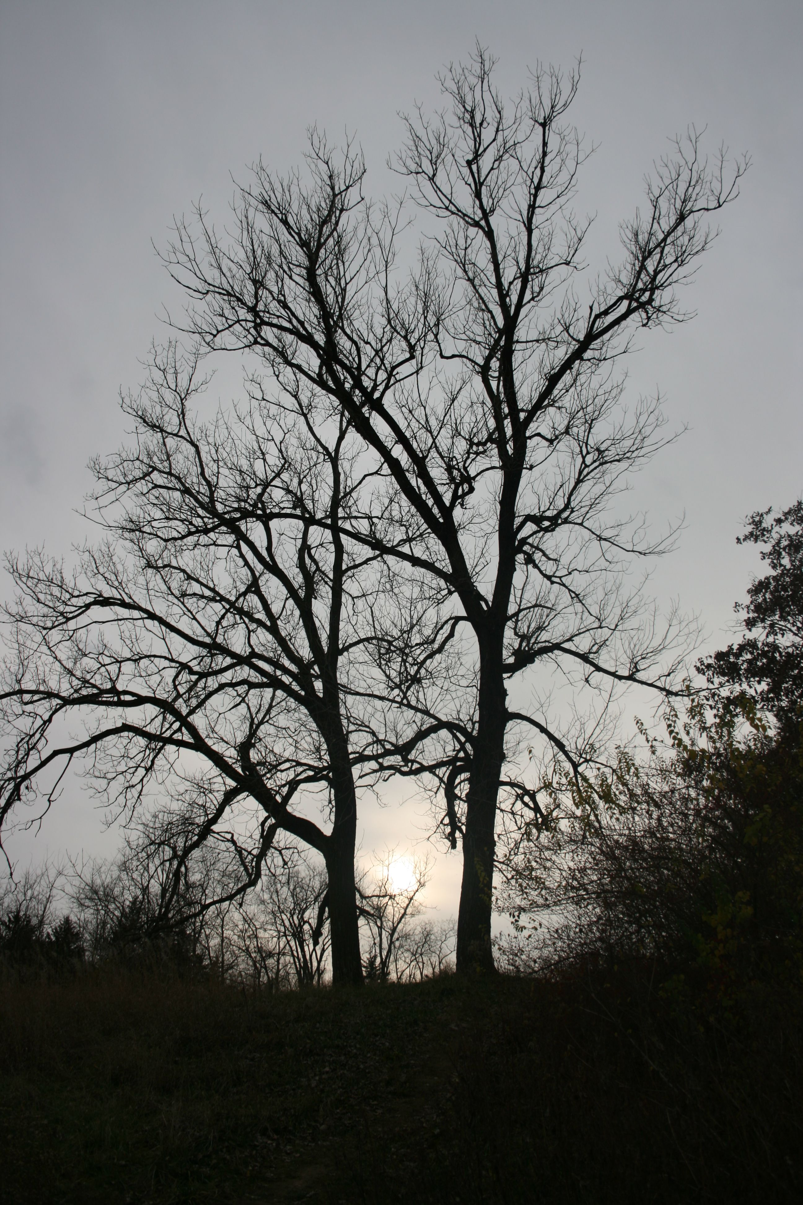 I love trees... Especially with no leaves