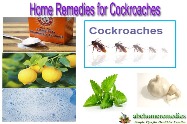 Home Remedies For Cockroaches Health Home Remedies Home
