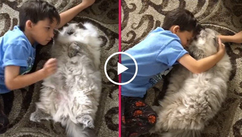Watch the incredible, heart-melting bond between a sweet little boy and a beautiful fluffy cat.