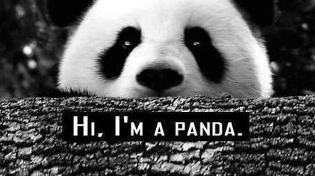 Panda Quotes Gorgeous Panda Quotes  Tumblr  Pandamonium  Pinterest  Panda