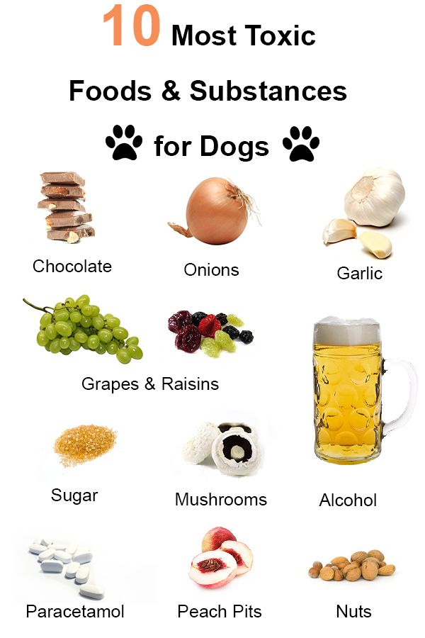 Toxic Foods And Substances For Dogs Pets Cats Dogs Care