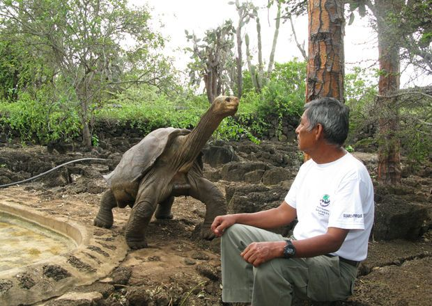"the giant tortoise. ""el Solitario Jorge"". one of a kind."