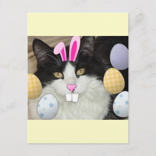 Easter Black and White Kitty Cat Holiday Postcard