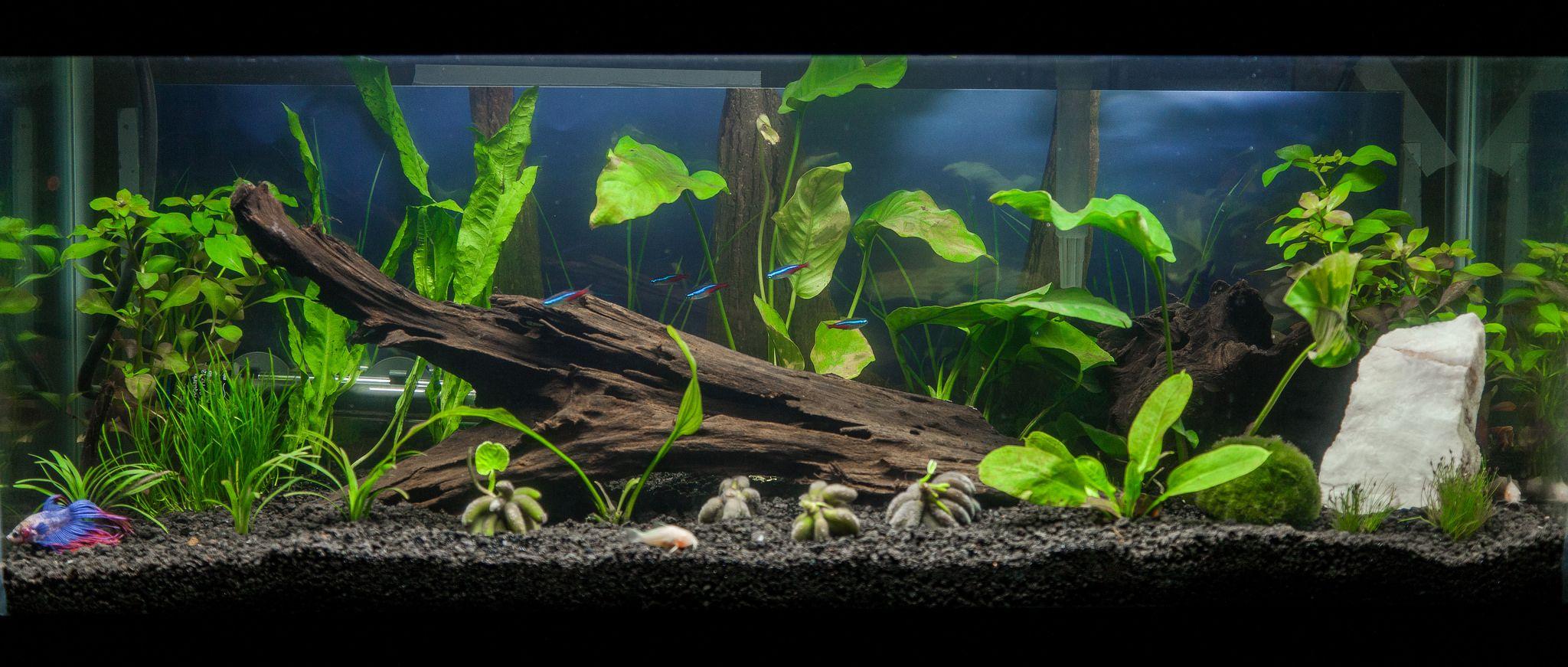Gallonplantedtank aquariums