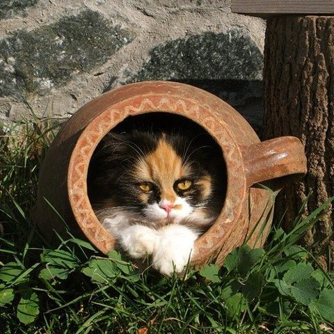 Kittyinyourpottery