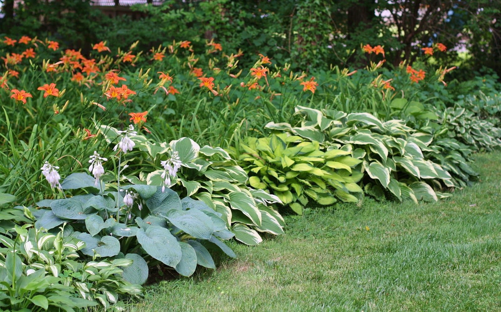 landscaping with tiger lillies and hosta
