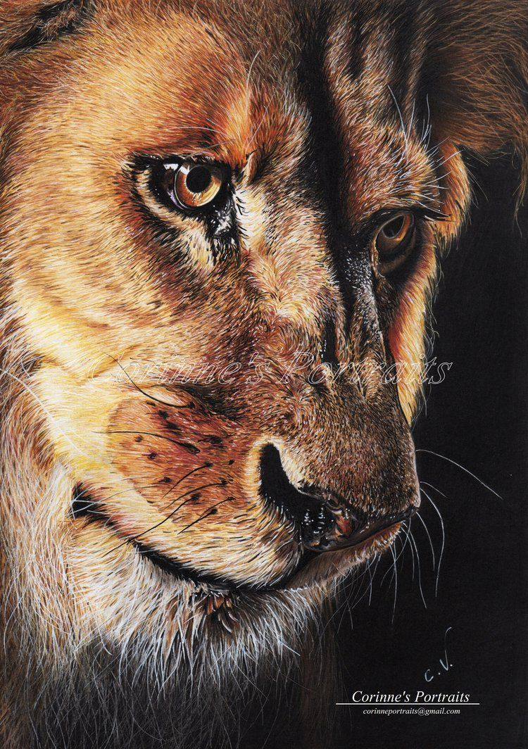 Wonderful Wallpaper Lion Facebook - 051d6bf01e2c30e9dc7362b153be3ba6  Pictures_488548.jpg
