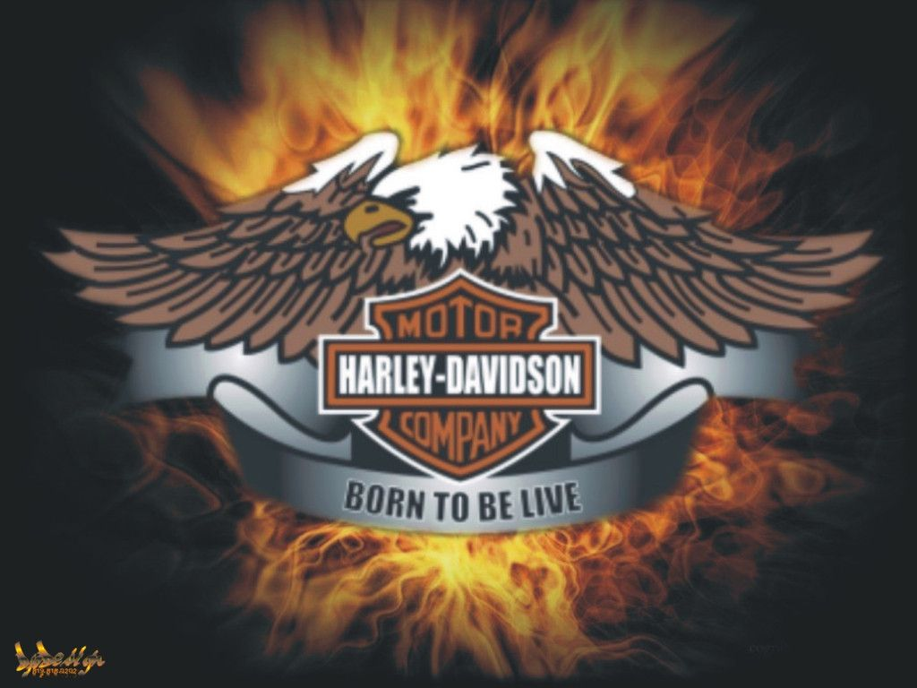 Download Live The Free Harley Davidson Born Wallpaper 1024x768 Harley Davidson Wallpaper Harley Davidson Bikes Harley Davidson Motorcycles