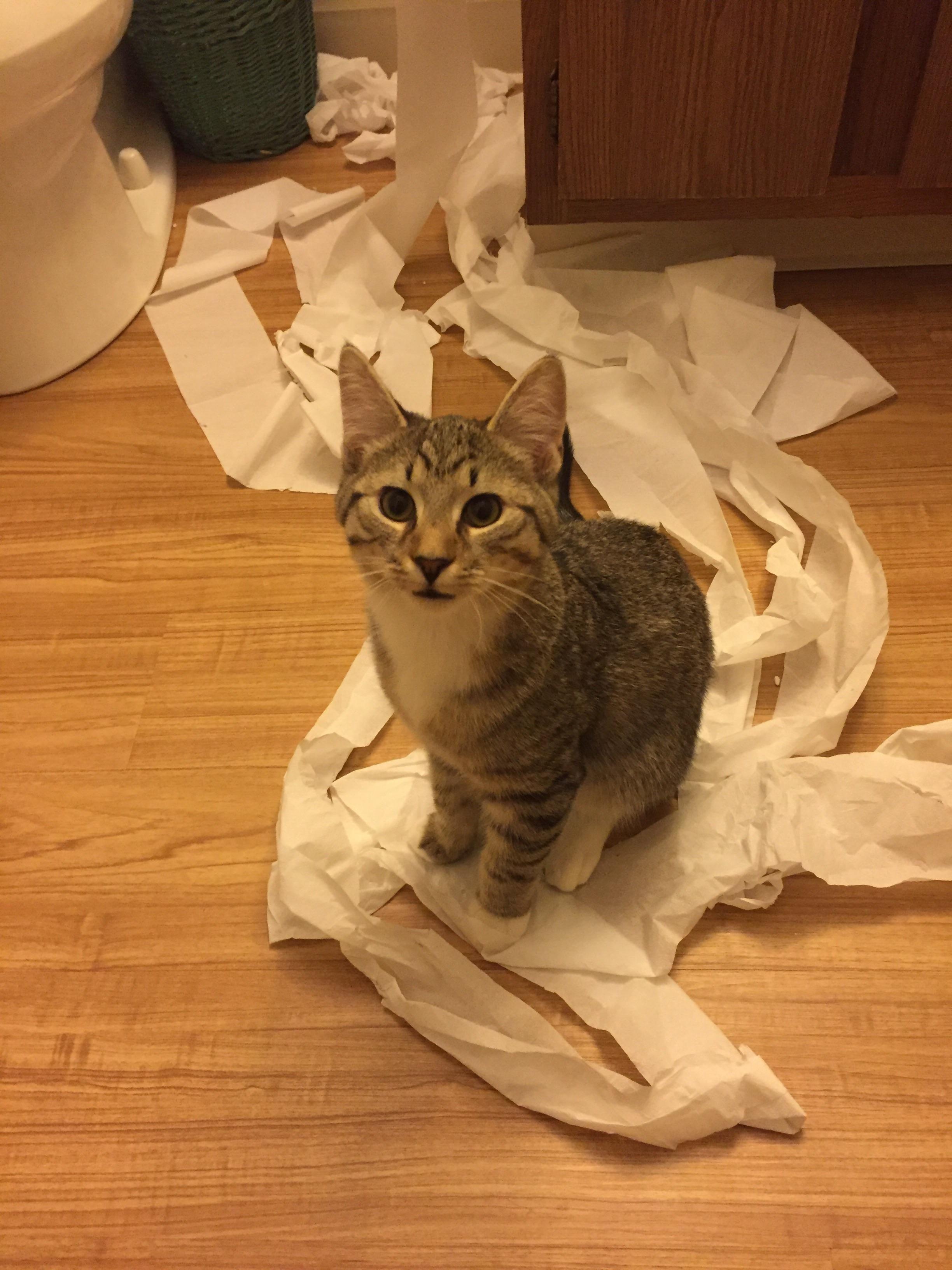 Lovely Kittens Slip In The Bathroom Cute Puppies And Kittens Cute Cats And Kittens Cat And Dog Videos