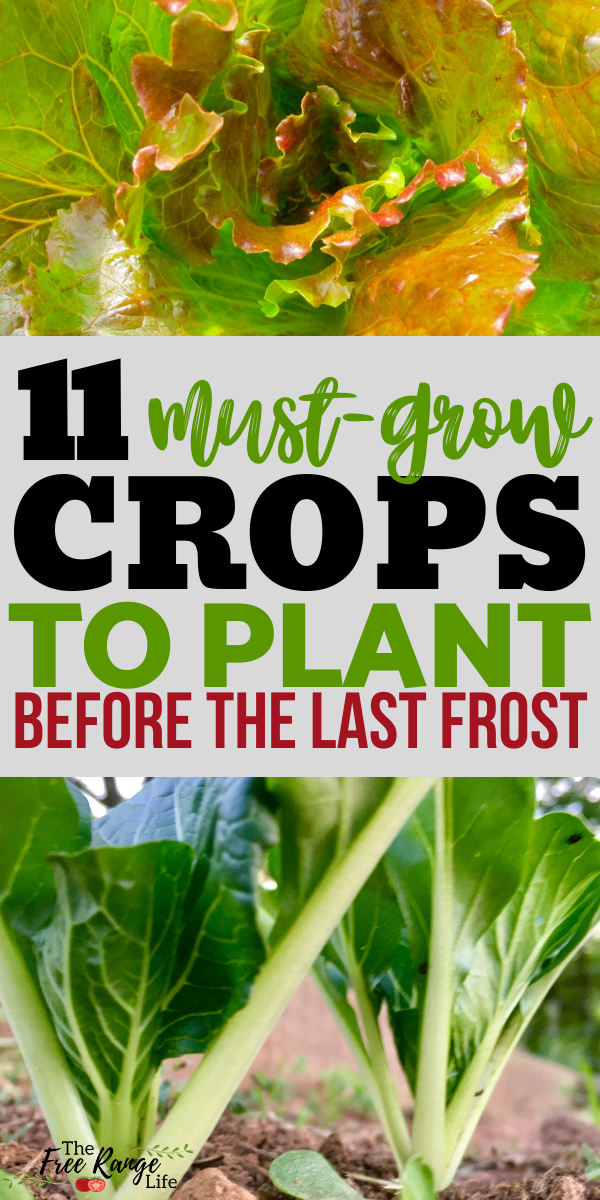 11 Crops You Can Grow BEFORE the Last Frost 11 Crops You Can Grow BEFORE the Last Frost