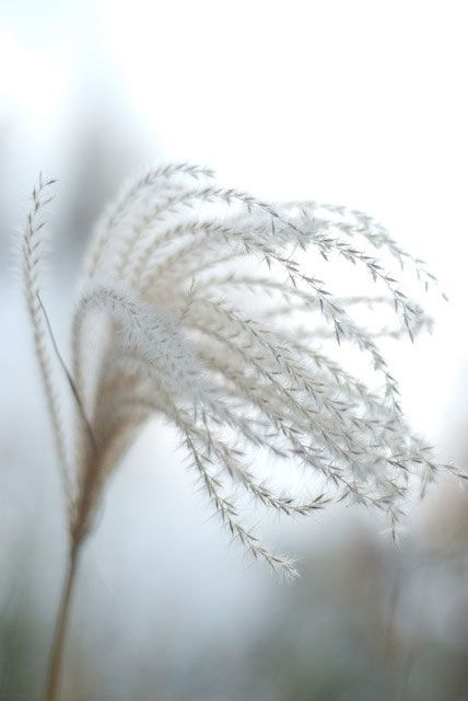 winter grass by By enggul