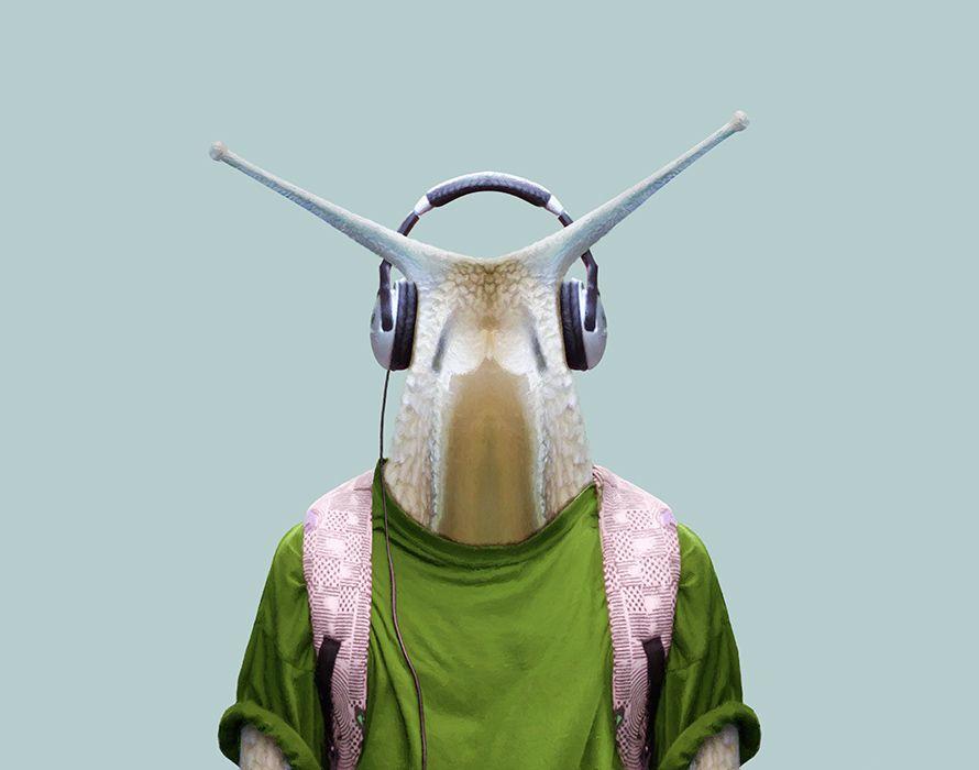 Burgundy-Snail---Helix-Pomatia-copia