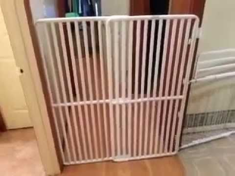 Extra Tall Cat Gate By Rover Company Pet Videos Pinterest Gate