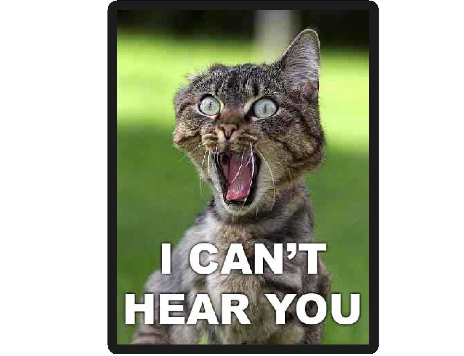 Funny Cat I Can T Hear You Refrigerator File Cabinet Magnet Funny Happy Birthday Pictures Funny Happy Birthday Meme Cat Birthday Memes