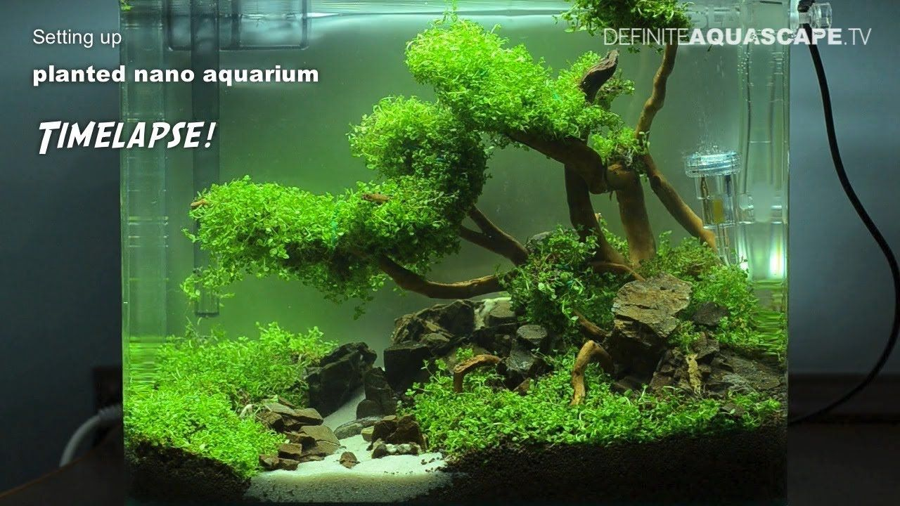 Setting up planted nano aquarium timelapse awesome for Best fish for nano tank