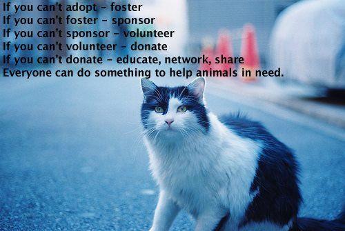 animal welfare Animal advocacy, Animals, Animal rescue