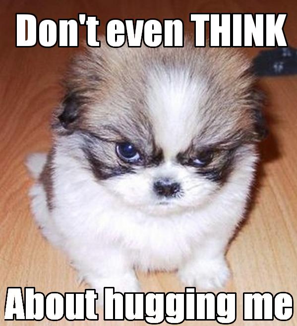 051ffbc6c730fbff81606193a2009322 grumpy dog doesnt like hugs funny meme grumpy dog, funny memes and hug