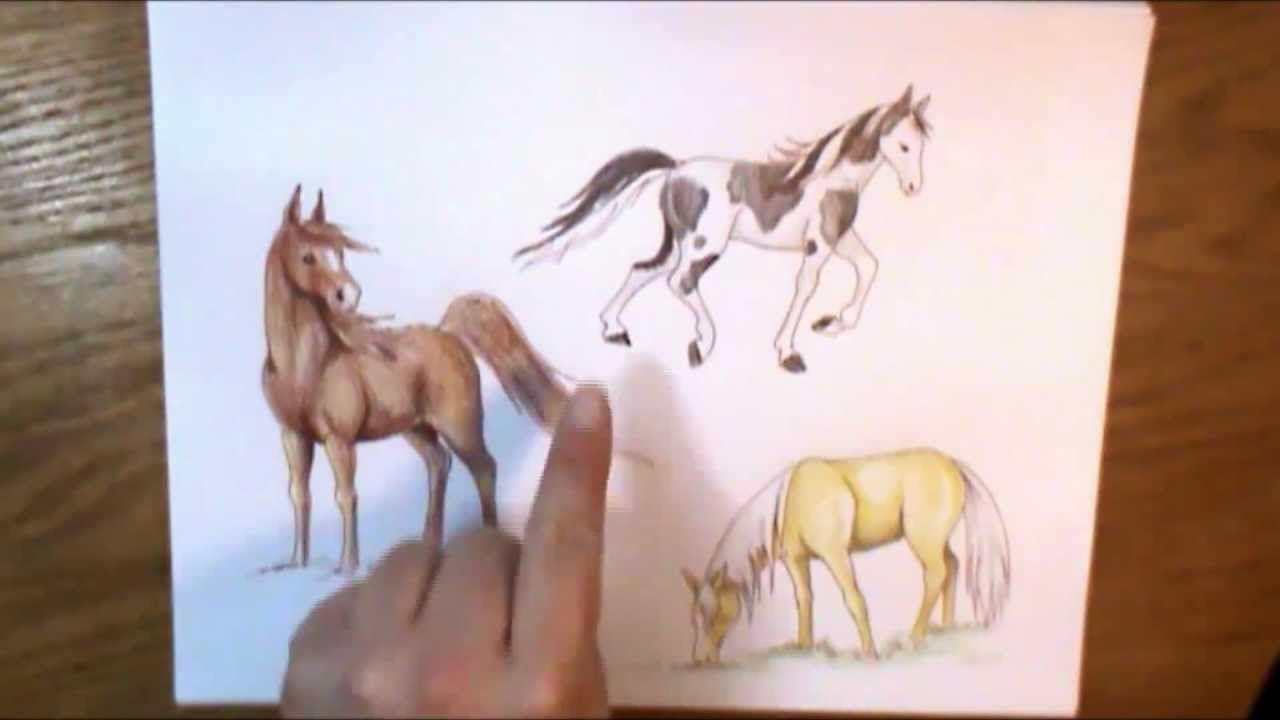 1000+ Images About Drawing Horses On Pinterest How To Draw, Lighting And  The O