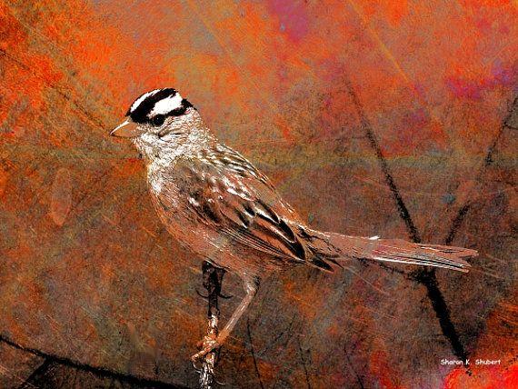 Fall Sparrow Autumn Bird Leaf Background Textured Grungy Orange Art 8 x 10 Giclee Print on Etsy, $25.00