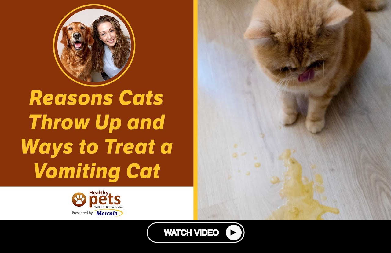 Reasons Cats Throw Up And Ways To Treat A Vomiting Cat