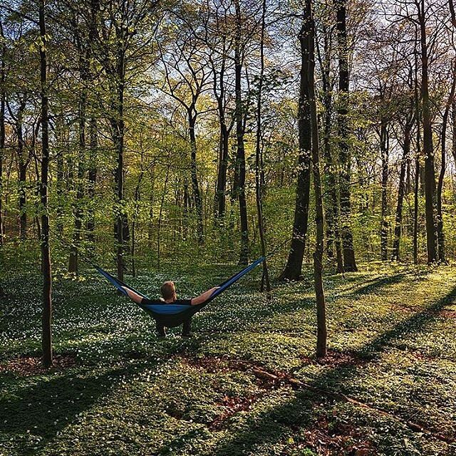 Nature is always calming us down- especially with a scenery like this : @janpusdrowski #hammocktothemoon #hammock #forest #relax