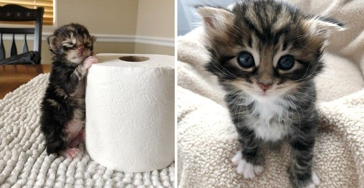 Kitten Found Abandoned In A Bush Just Hours Old Has Her Life