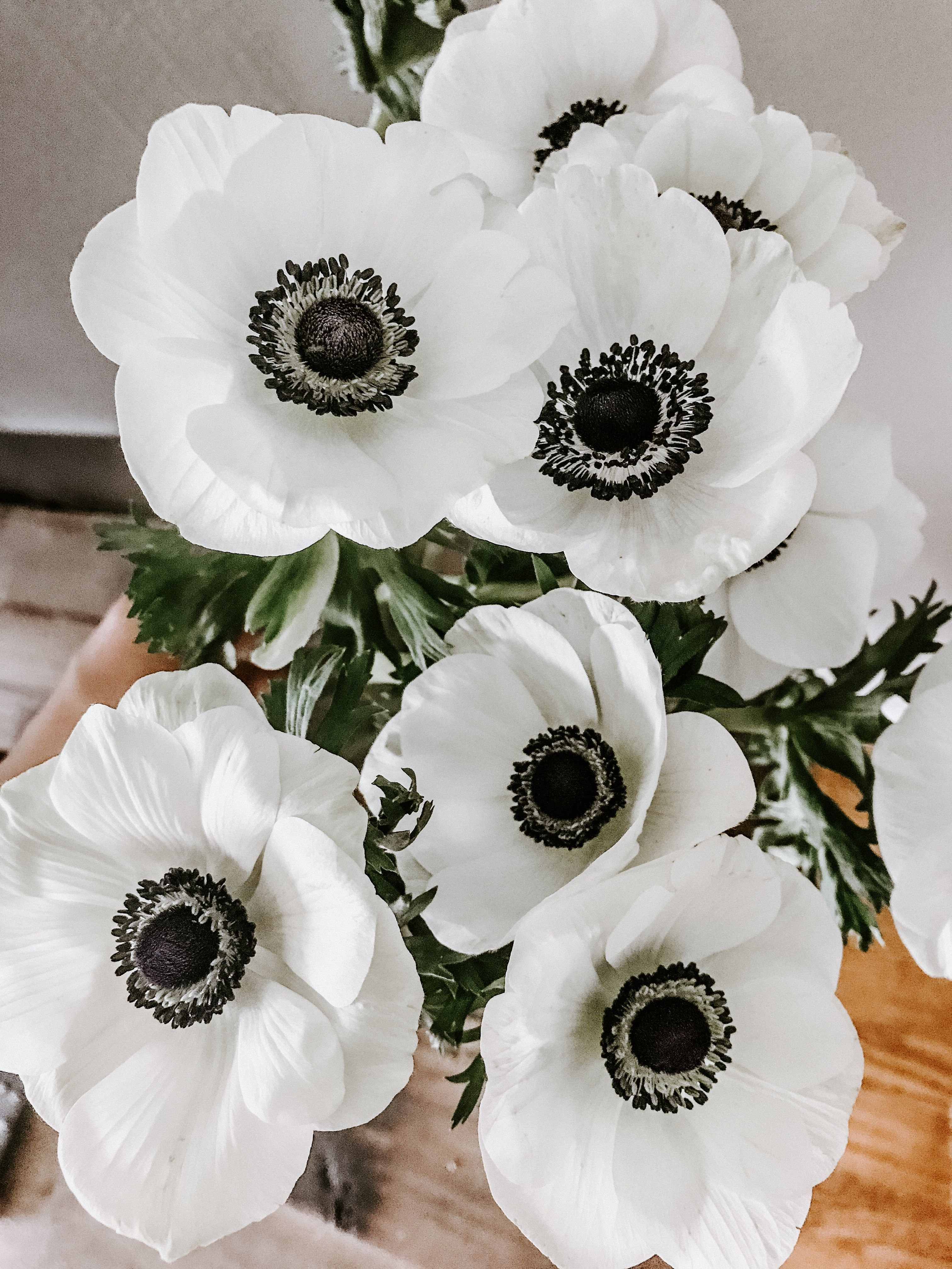 Black Eyed Anemones Anemone Flower Pretty Flowers Flower Arrangements