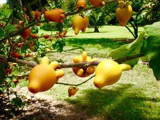 Weird Food Plants 7