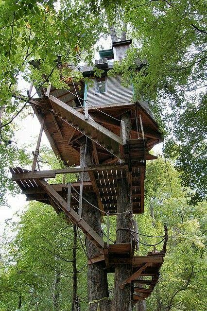 Tree  house  41
