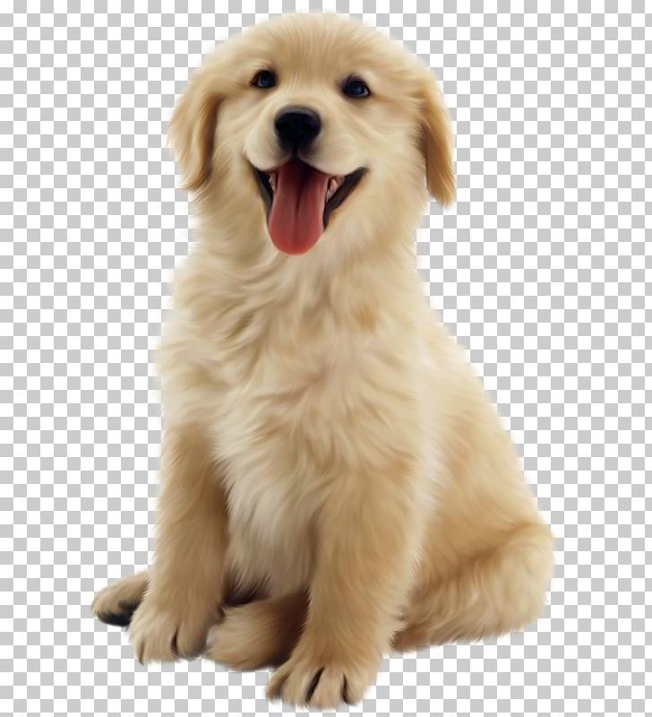 Golden Retriever Puppy Pet Dog 10 Golden Retriever Puppy Digital Painting Png Clipart Free Clipart Retriever Puppy Golden Retriever Puppy Golden Retriever