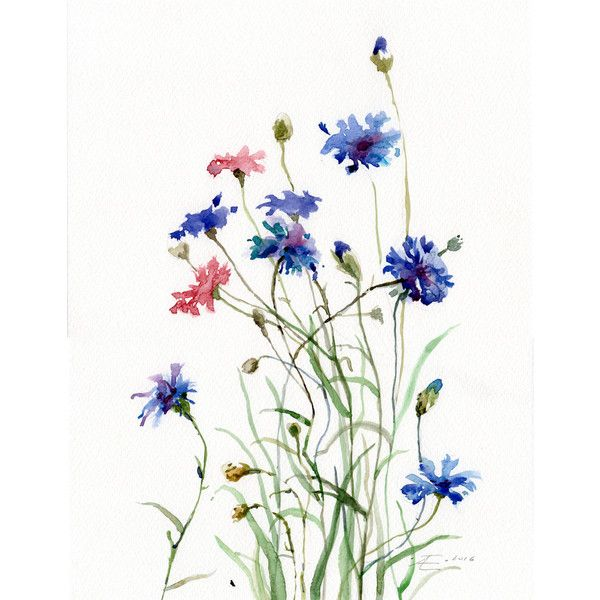 Cornflowers, Bachelor Button Flowers painting, Wild Flowers WATERCOLOR... (€81) ❤ liked on Polyvore featuring home, home decor, wall art, watercolor painting, water color painting, flower wall art, water colour painting and flower home decor