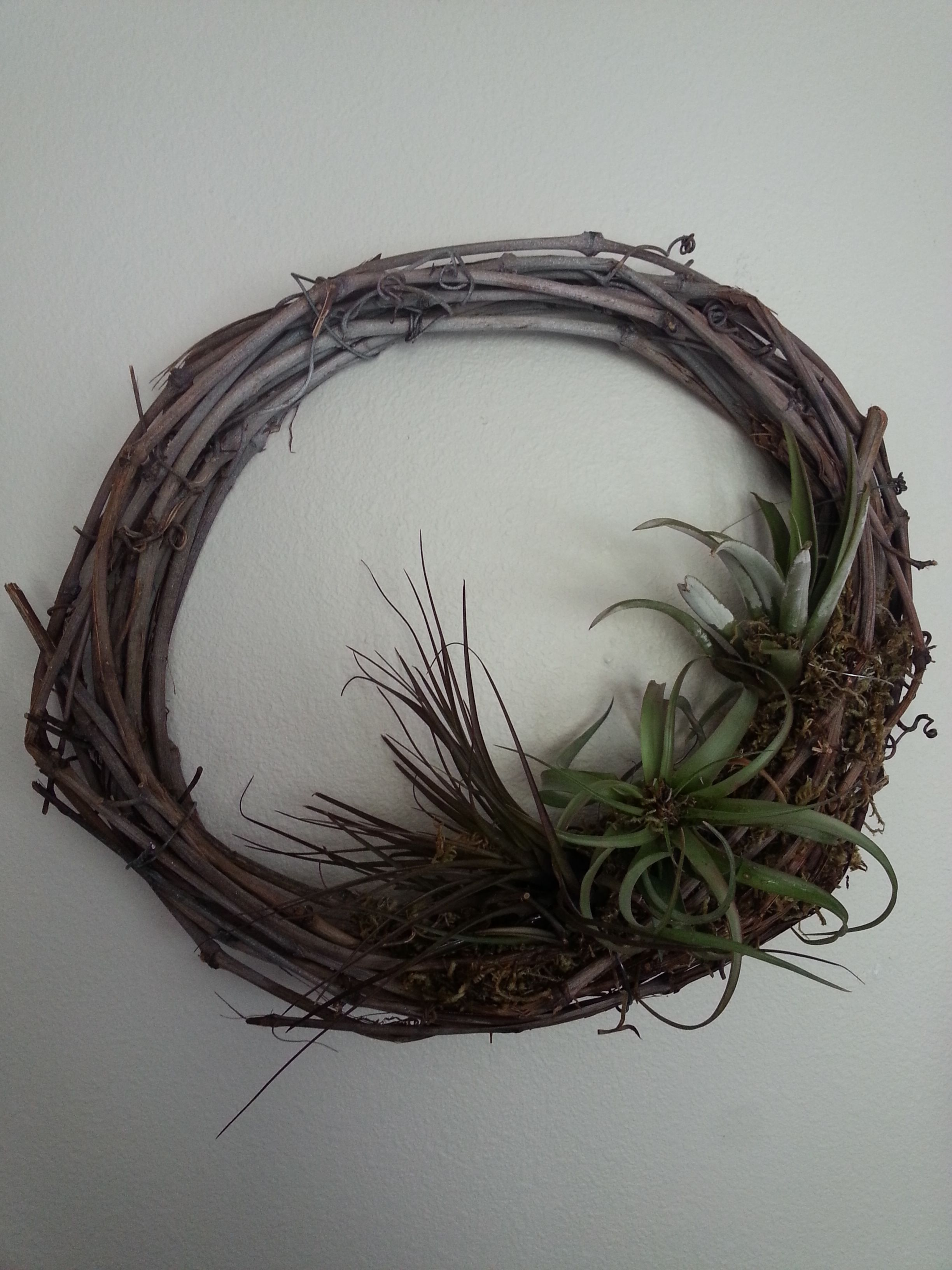 Twig wreath comes alive with three air plants embedded in moss attached with wire.  Just mist once a week.  So easy and FUN!