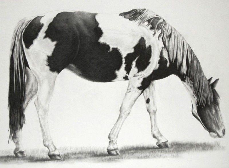 pinturas al oleo | graciela | Pinterest | Dibujos de caballos ...