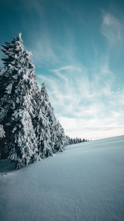 The Latest Iphone11 Iphone11 Pro Iphone 11 Pro Max Mobile Phone Hd Wallpapers Free Download Fir Tree In 2020 Winter Landscape Wallpaper Free Download Forest Photos