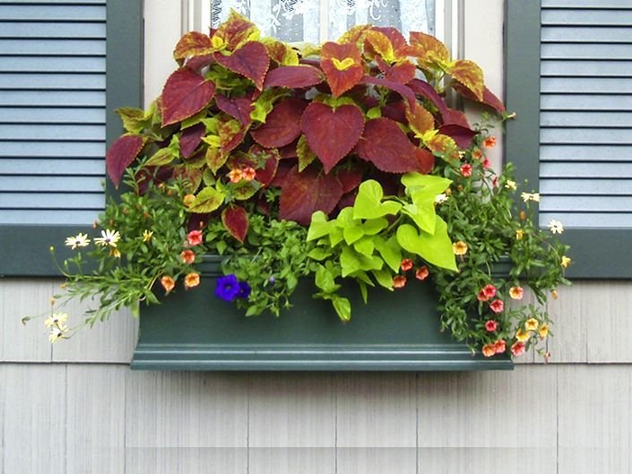 Shop for Window Boxes - Planter Boxes - Flower Boxes Window boxes