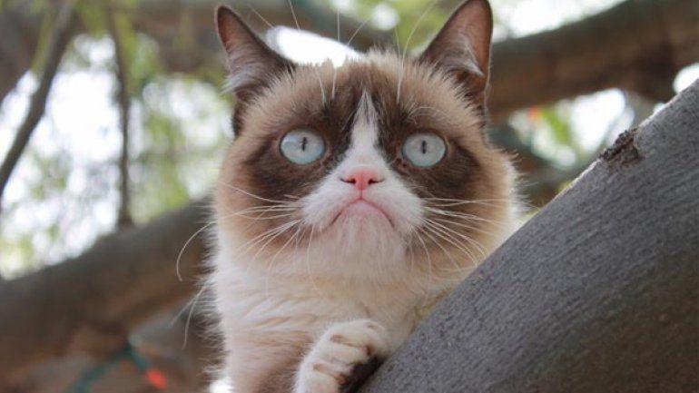 Grumpy Cat, el gato más antipático de internet, amasó u$s100 millones | YouTube - América