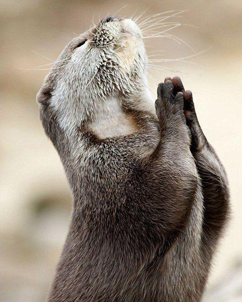 Es hora de rezar un poquillo acordándonos de la Virgen María. #Ángelus