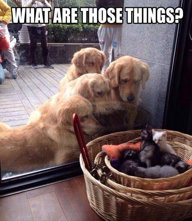 Funny Pictures Of The Day Pics Animal Love Pinterest - Dogs looking funny with toys