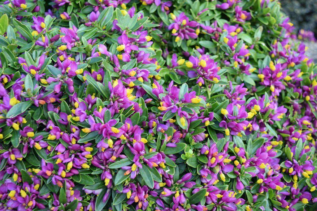 Bodendecker Die Schonsten Pflegeleichten Sorten Plantura Bodendecker Einfache Gartengestaltung Garten Bepflanzen