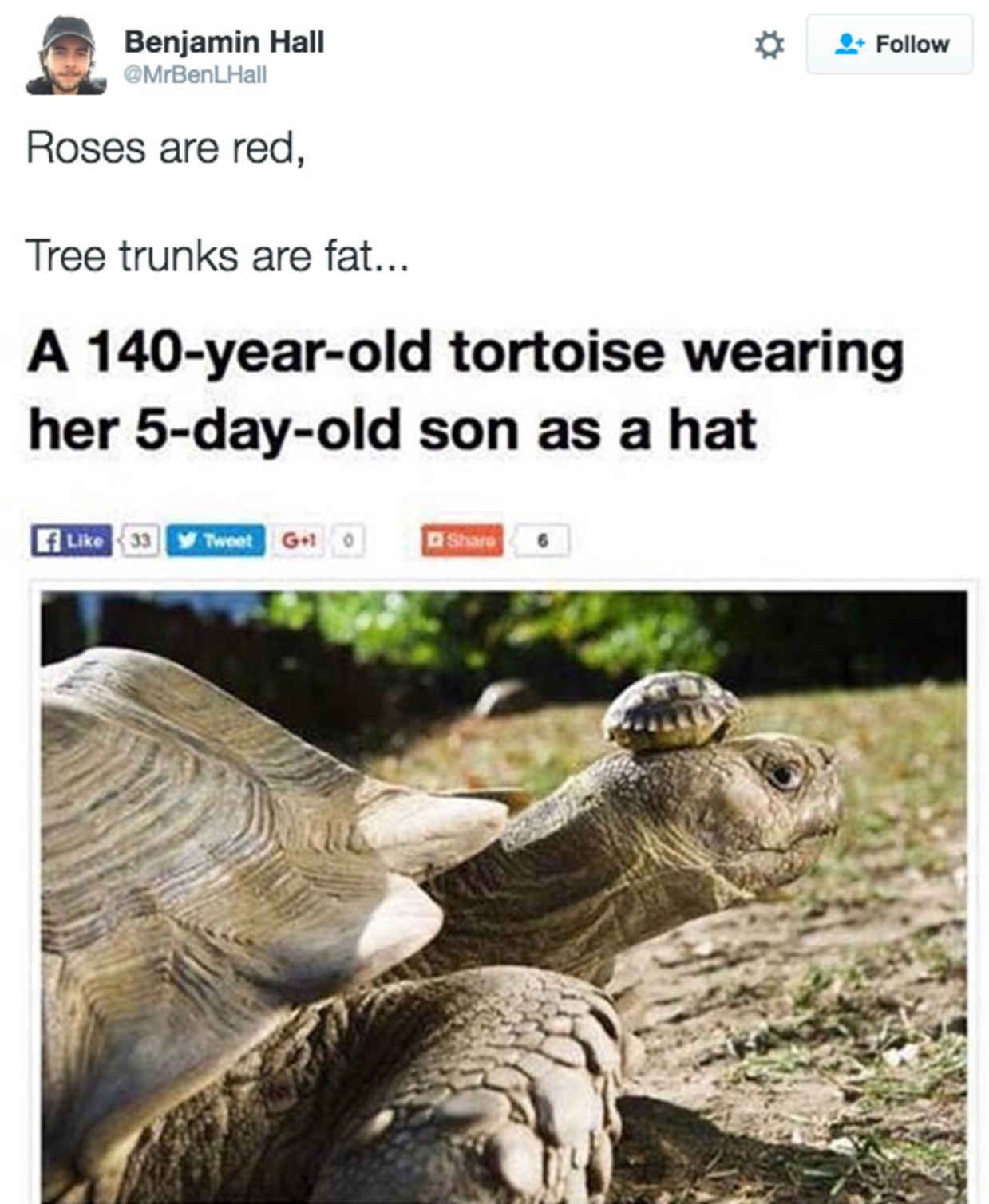 Roses Are Red Tweets That Are Unbelievably Funny Rose - 18 roses are red tweets that are unbelievably funny