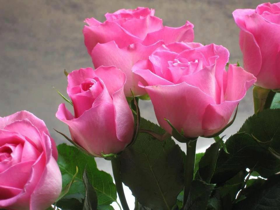 Lovely Bunch Of Pink Roses