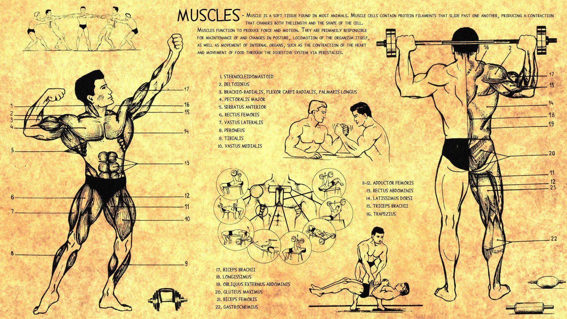 Artistic Anatomy Wallpaper More Information 19201080 Anatomy