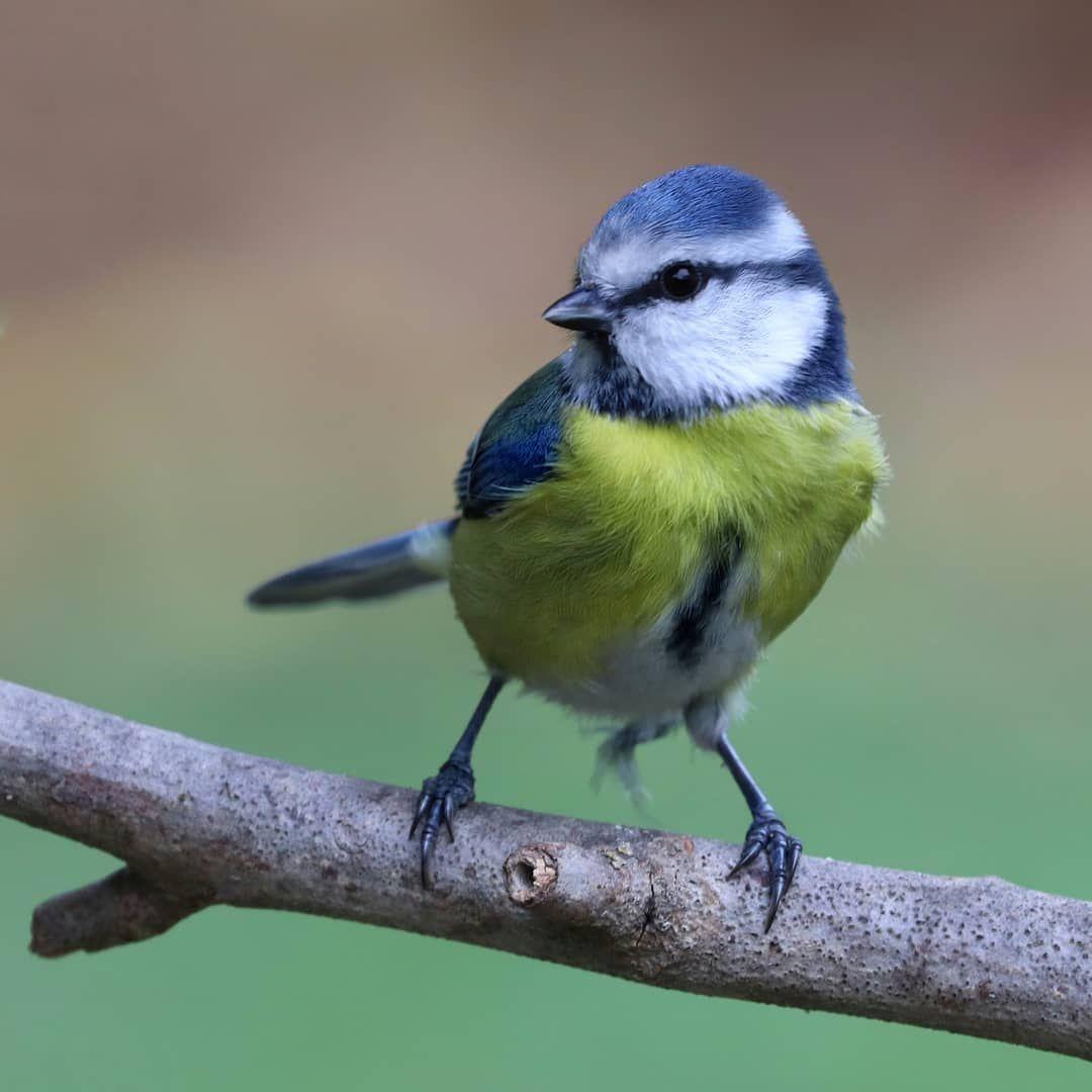 Epingle Sur Birds
