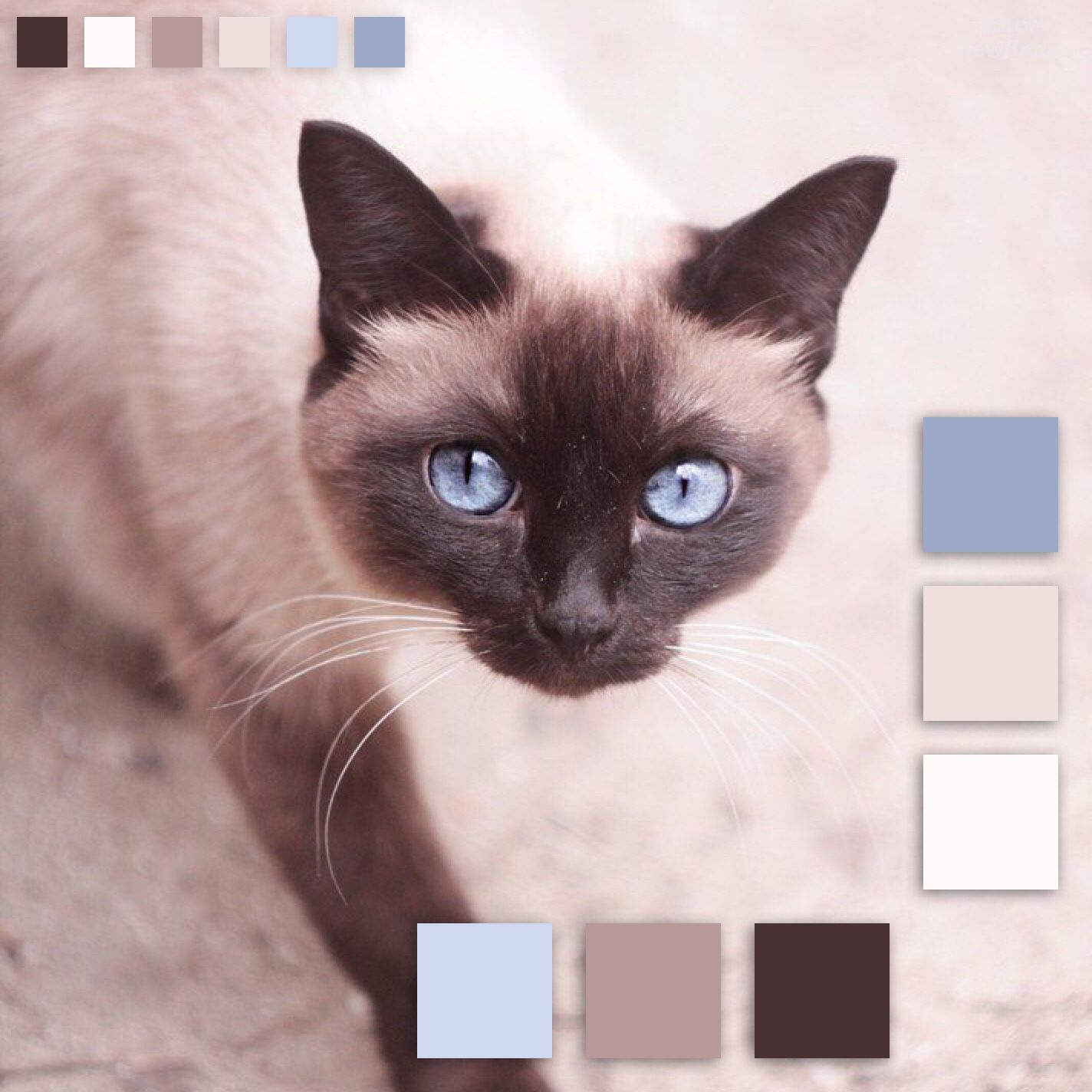 Pin By Brianne Law On C O L O R P A L E T T E S Cat Colors Color Palette Siamese Cats