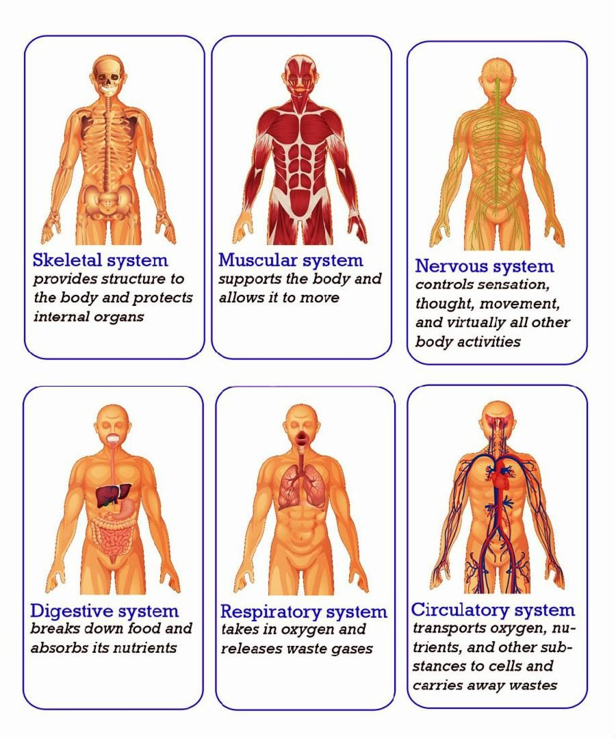 Check out this #Kahoot called \'Human Body Systems Review\' on ...
