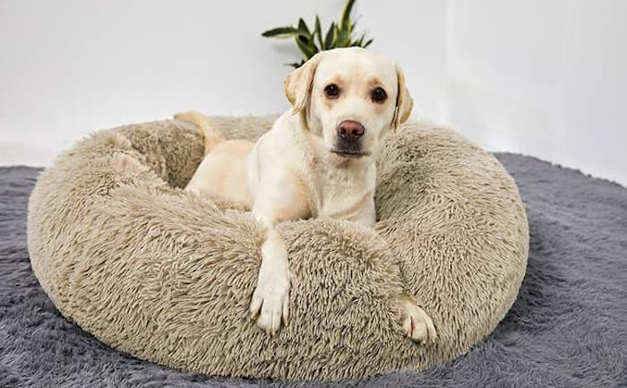 Best Calming Beds For dogs- Top Small & Large Beds 2020 - Dogs Paradise   Dog top, Round dog bed, Dog bed