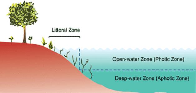 بحث عن الانظمة البيئية المائية والمناطق الحيوية Water Zone Aquatic Ecosystem Littoral Zone